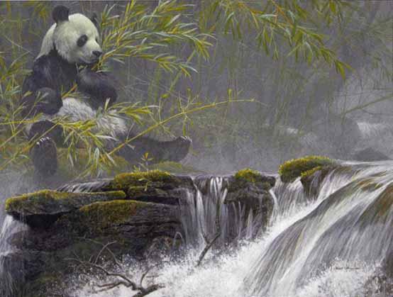 giant panda 1985